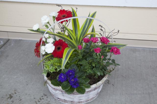 0A-Planter_Baskets_Port_Alberni-9486.jpg