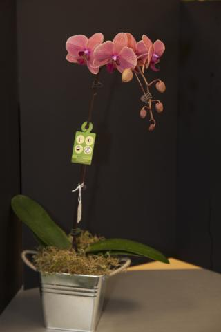 Happy_Easter_Orchids_Port_Alberni.jpg