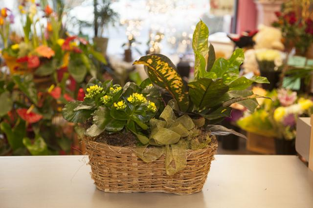 ZZPB_Planter_Basket_Port_Alberni_A.jpg