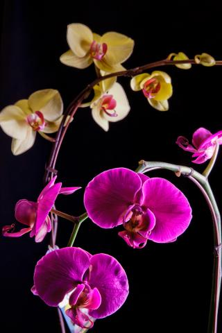 orchid-plants-port-alberni.jpg